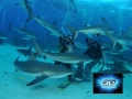 SHARK-FEEDING  (video 3d)